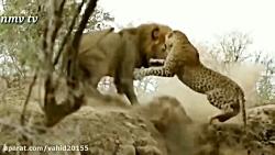 شکار حیوانات حیات وحش