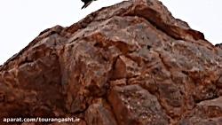 عقاب طلایی پارک ملی تور...