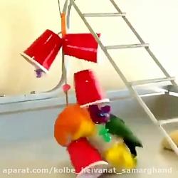 بازی طوطی خان با اسباب ...
