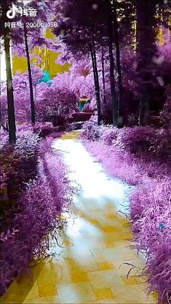 طبیعت زیبا ی ارغوانی