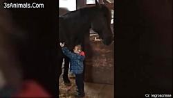 جالب ترین کلیپ از بچه ها و اسب های بامزه