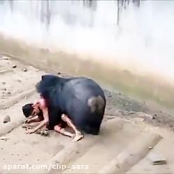 کشتن انسان توسط خرس