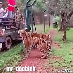حیات وحش کمدی(دوبله)
