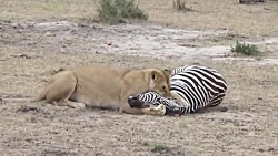 10 نبرد خشن حیوانات