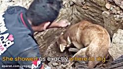 کمک سگ مادر برای نجات فرزندان دفن شدش - گروه وگا
