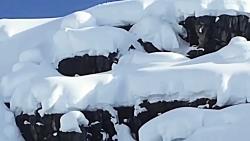 Epic Ski Stunts 2018