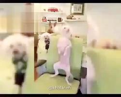 حیوانات خنده دار