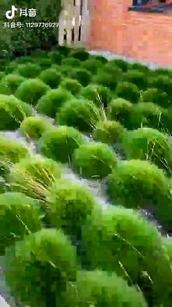 طبیعت وزیبایی، گیاهان
