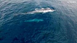بزرگترین حیوانات دریا