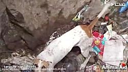 6 صحنه از نجات حیوانات ت...