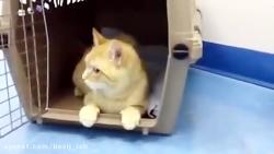 گربه ی مبتلا به هاری