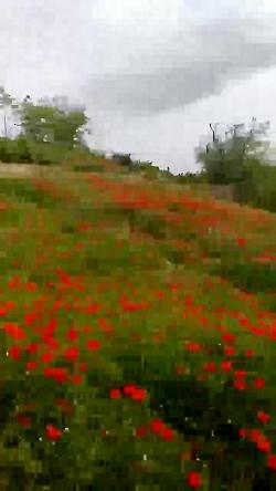 طبیعت زیبا روستای دولت ...
