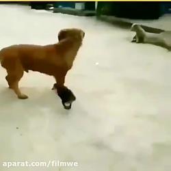شوخی خرکی حیوانات