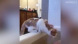 کلیپ خنده دار / نبرد گربه ها با آب