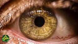 بیوکنزی قدرتمند چشمان طلایی عسلی تغییر رنگ چشم به طلایی درخشان.