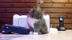 گربه+چکمه+پوش+ +پتریتو+ +26742769+021+- +petrizo_com