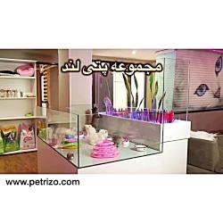 بچه+گربه +26742769+021+- +petrizo_com
