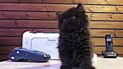 سگ+و+گربه+پتریتو+ +26742769+021+- +petrizo_com