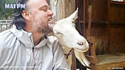 دوستی بعضی حیوانات به انسانها