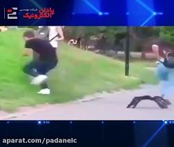 دوربین خنده دار حمله عنکبوت به مردم