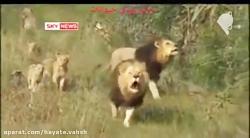 این فیلم متخصصان حیات وحش در سراسر جهان را شگفت زده کرده