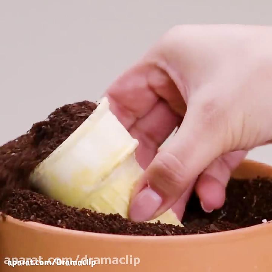 کاشت انواعی از گیاهان