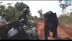 حمله خطرناک حیوانات وح...