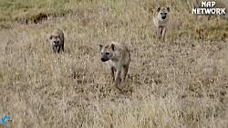 شکارهای حیوانات وحشی
