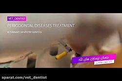 خدمات  دندانپزشکی حیوا...