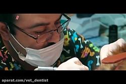 خدمات دندانپزشکی حیوان...