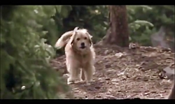 حفاظت يك سگ از توله ببر...