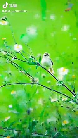 صدای  طبیعت زیباست