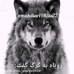حکایت جالب گرگ و روباه