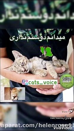 همين امروزيك گربه راازمرگ تدریجی نجات دهيد!! زندگی بخشیدن زیباست.