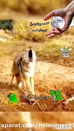 حقوق حیوانات در اسلام