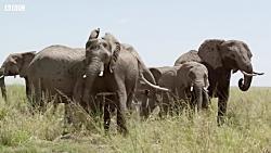 هوش باور نکردنی فیل ها