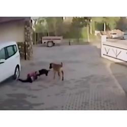 حمله سگ به دختر مدرسه ا...