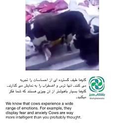 عشق به حیوانات