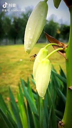 زنبور در طبیعت زیبا