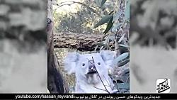 حسن ریوندی  - بازدید خنده دار و بامزه از باغ وحش استرالیا