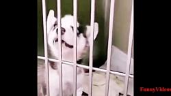 خنده دار ترین کلیپ سگ ها ته خنده 2019