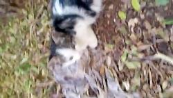 ترسییدن گربه ام(اسمش vernal)توسط من