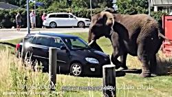 حوادث در دنیای حیوانات
