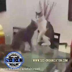 دفاع شخصی حیوانات