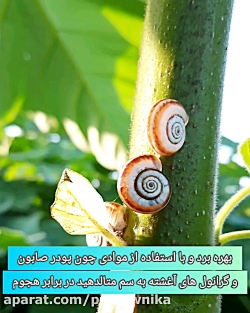 اصول داشت درخت پالونیا