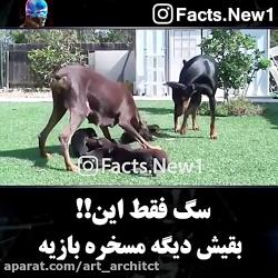سگ فقط این؟!