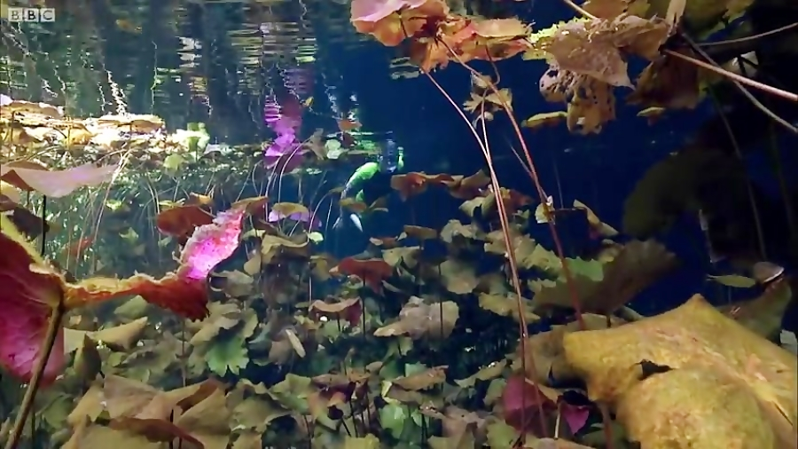 دنیای حیوانات - موجودات شگفت انگیز غارهای زیر آب - Amazing Underwater Caves