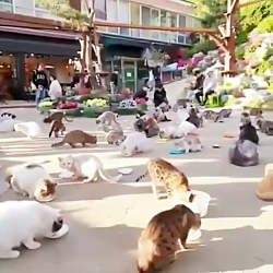 پانسیون شبانه روزی گربه در مجموعه ما ۰۹۳۶۸۳۰۲۹۸۸
