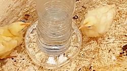 ساخت آبخوری کوچک برای جوجه های کوچک