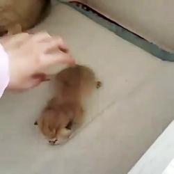 پانسیون گربه در محیطی بهداشتی ۰۹۳۶۸۳۰۲۹۸۸